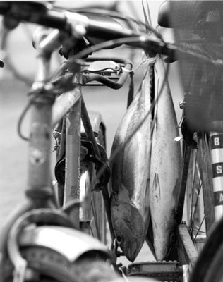 """fish on bike&quot"
